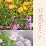seeds for bees Australia wild flowers Greenery Lane