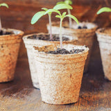 Greenery Lane Seed Starter Pots eco friendly degradable pots australia seed starting greenery lane