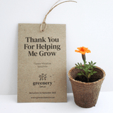 Greenery Lane Teacher Gifts - Seed Packet / Gift Tag Teacher Seed Gifts Australia packet thank you for helping me grow eco