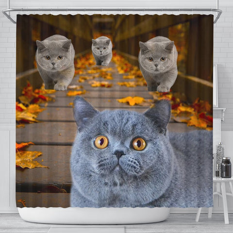 Amazing British Shorthair Cats Shower Curtain-Free Shipping