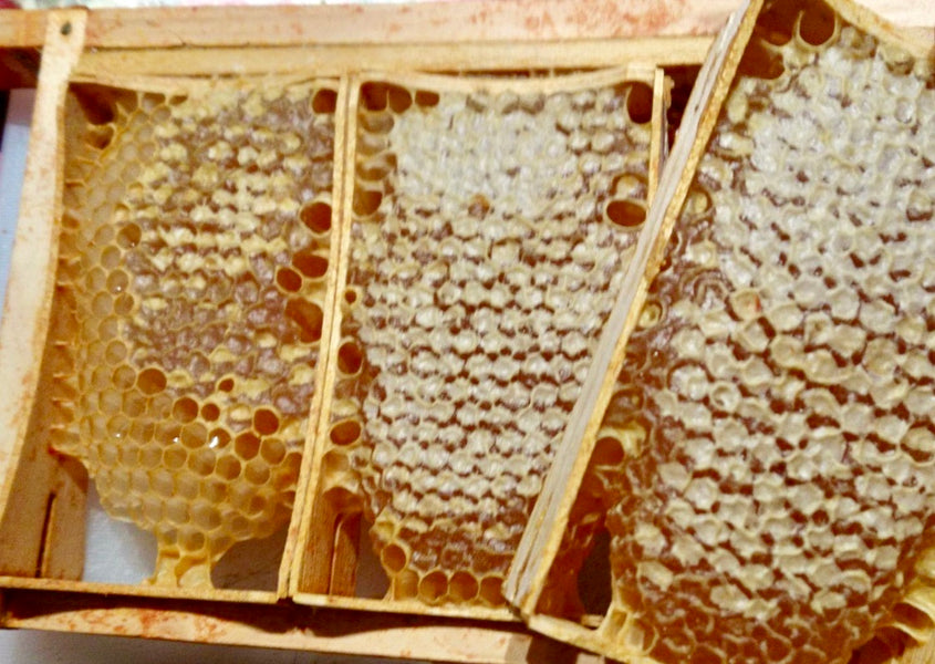 Bees for Business Launches the UK's Only 'School of Honey'