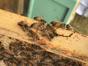 BOOKING PAGE: Beekeeper for a Day Gift Experience - Redeem Voucher
