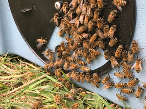 NEW! Off-Season Beekeeping for Beginners 1 Day Workshop