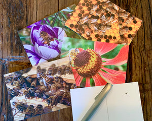 NEW! Pollinator Postcards
