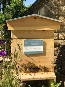 Business Honeybee Hive Adoption Plans