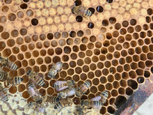 Nucleus of Near-Native British Honeybees (National) 2021 Mated Queen