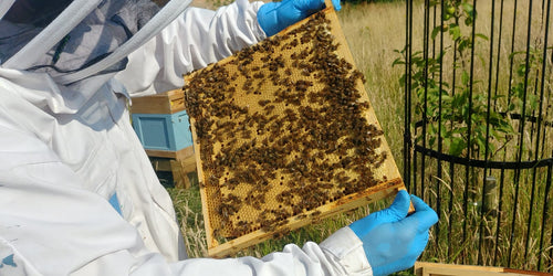 'Beekeeper for a Day' One-to-One Exclusive Gift Experience