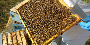 'Beekeeping Next Steps' 1 Day Workshop