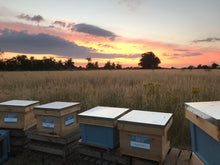 Beehive Twinning - twin your space with a honeybee hive