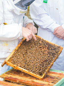 Beekeeping Next Steps 1 Day Workshop