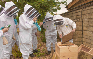 SPECIAL RE-BOOKING Beekeeping for Beginners 1 Day Workshop