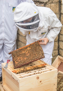 Beekeeping for Beginners 1 Day Workshop
