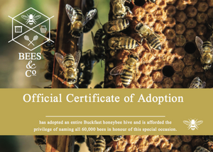 Adopt a Beehive - Your Own Raw, British Honey!
