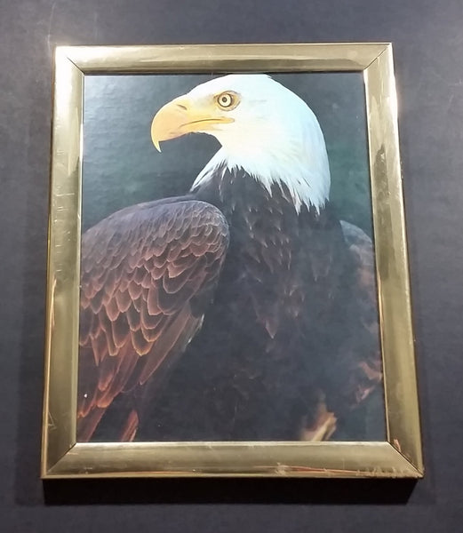 "Bald Eagle 8"" x 10"" Bird Print in Gold Tone Plastic Frame - Treasure Valley Antiques & Collectibles"