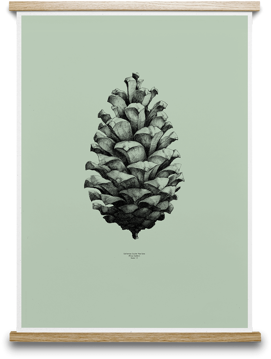 Pine Cone Form Us With Love - Light Green 50 x 70 cm