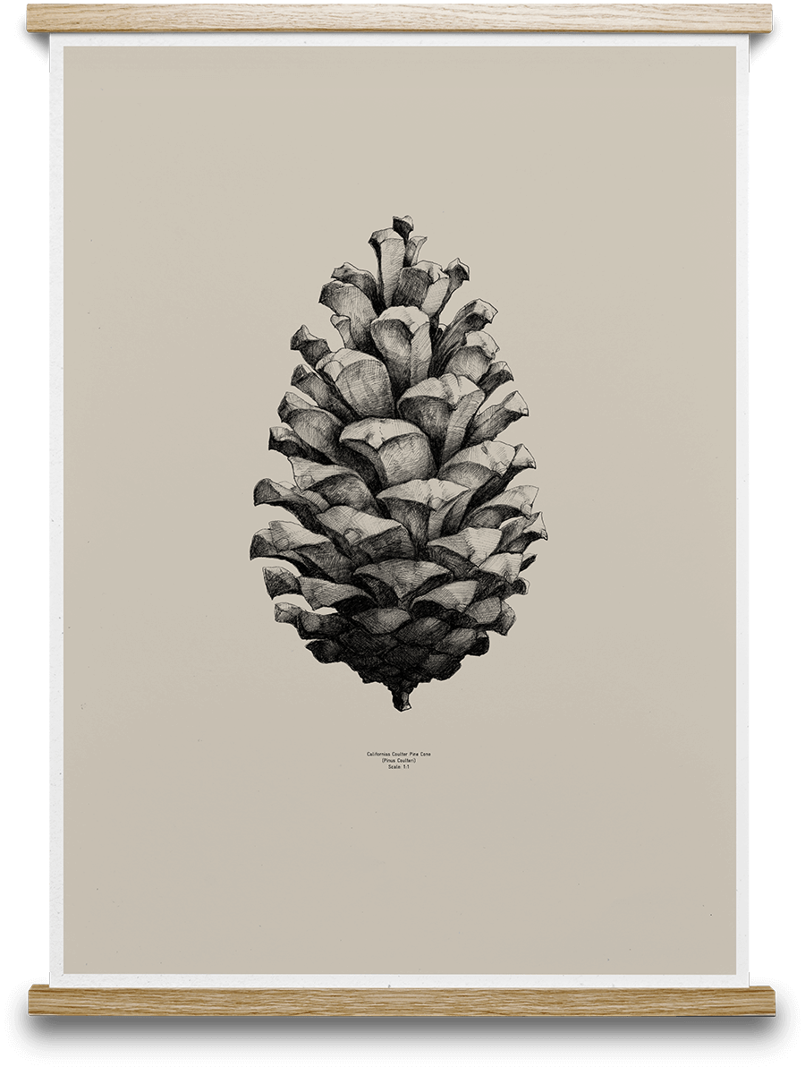 Pine Cone Form Us With Love - Sand 50 x 70 cm