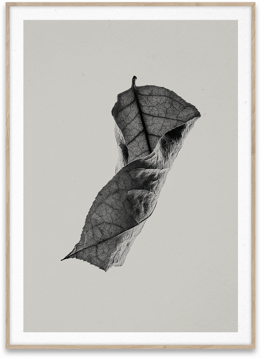 Sabi Leaf 04 Norm Architects 50 x 70 cm