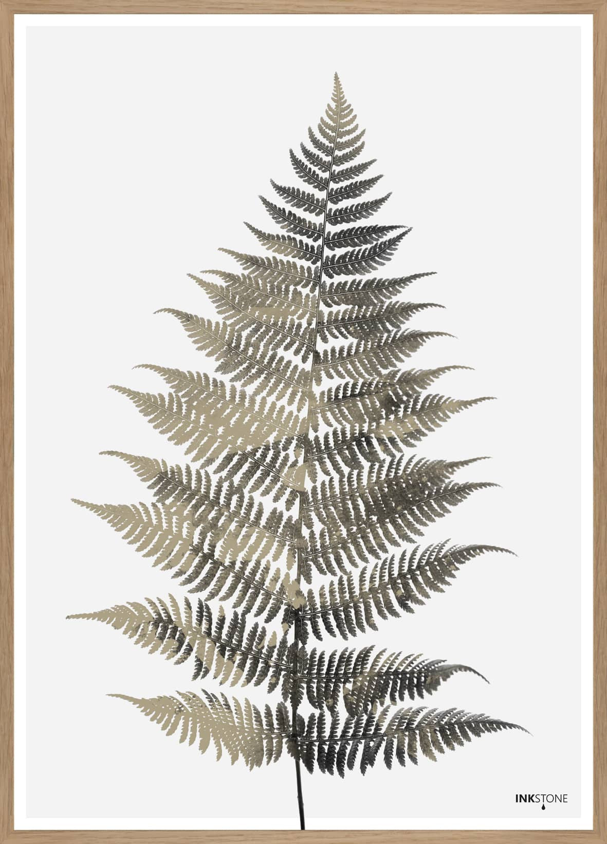 FINE ART POSTER - FERN ONE, 50 x 70 cm