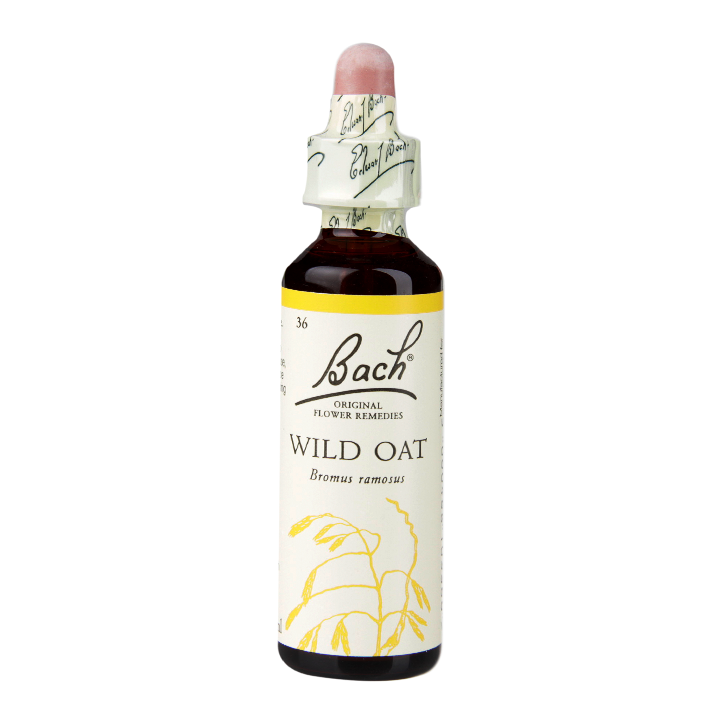 Wild Oat (Finding Life's Direction)