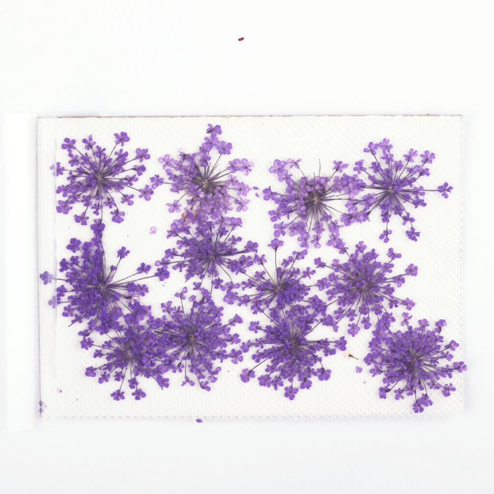 "Pack of 12 Real ""Minoan Lace"" Pressed Flower Embellishments"