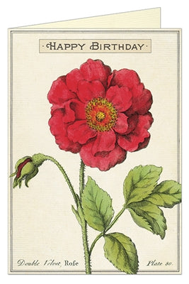 Birthday:  Birthday Rose