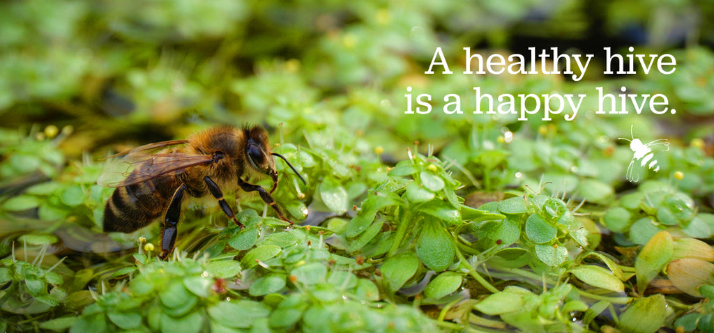All About Honeybees: From Hive Cleanliness to Backyard Watering Stations