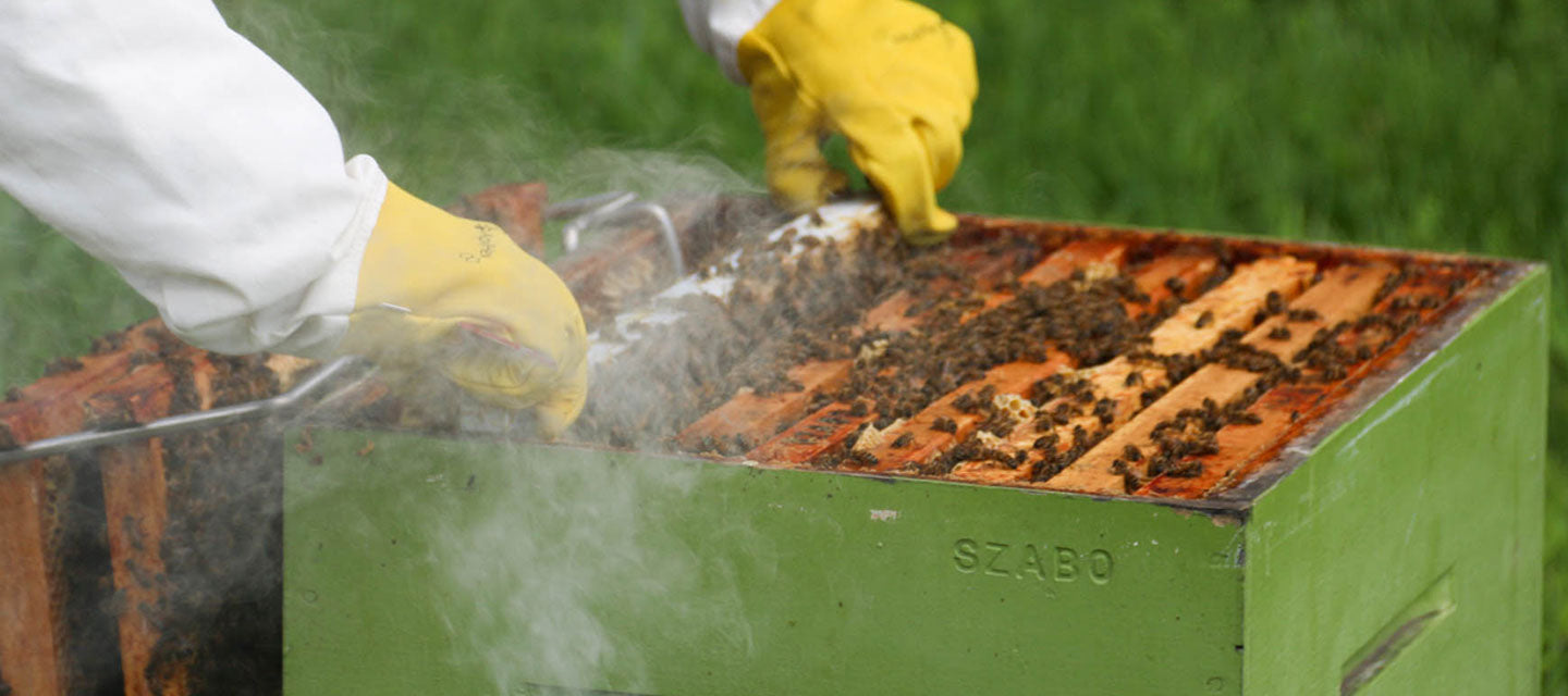 The gloved hands of a beekeeper adding smoke into the beehive