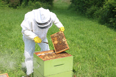 A beekeeper in a white beekeeping suit removes a honeycomb
