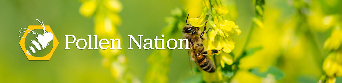 Pollen Nation educational activities