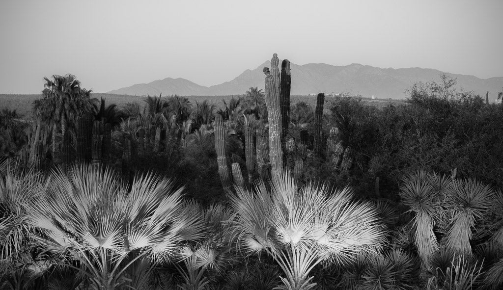 The desert in Todos Santos, BCS