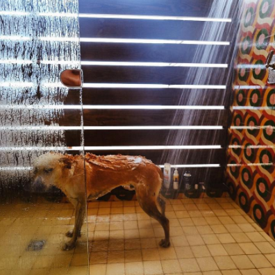 Dog taking a shower at the San Cristobal Hotel