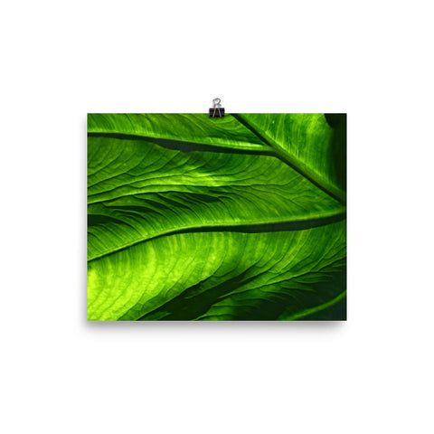 The Stockshirt Leaf 3 Photo paper poster