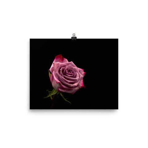 The Stockshirt Pink Rose Photo paper poster