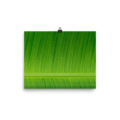 The Stockshirt Leaf Photo paper poster