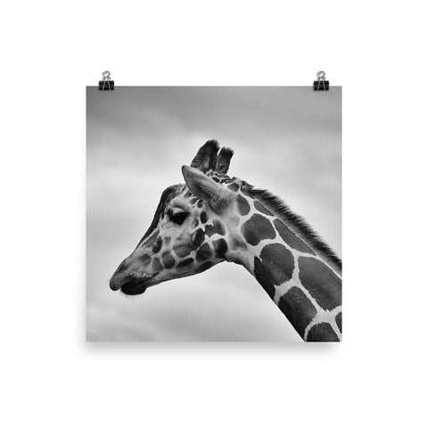 The Stockshirt Black and White Giraffe Photo paper poster