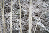 """Fresh Snow on Aspens and Evergreens, Wyoming"" Fine Art Photographic Print - Seneca Creek Studios"