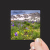 """Spring Sky Pilot Flowers and the Snowy Range Mountains, Wyoming"" Mini Metal Print - Seneca Creek Studios"
