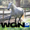 Hope Reins on WGN Radio! Listen HERE