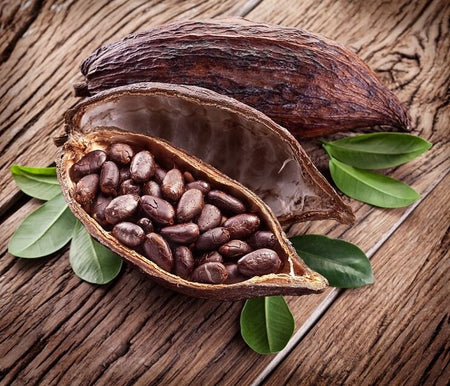 ABOUT THE CACAO TREE