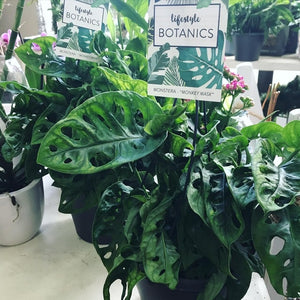 House plant trend, easy to care for plants and great pot selection