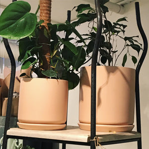 Heartleaf Philodendron & Stoneware Planter