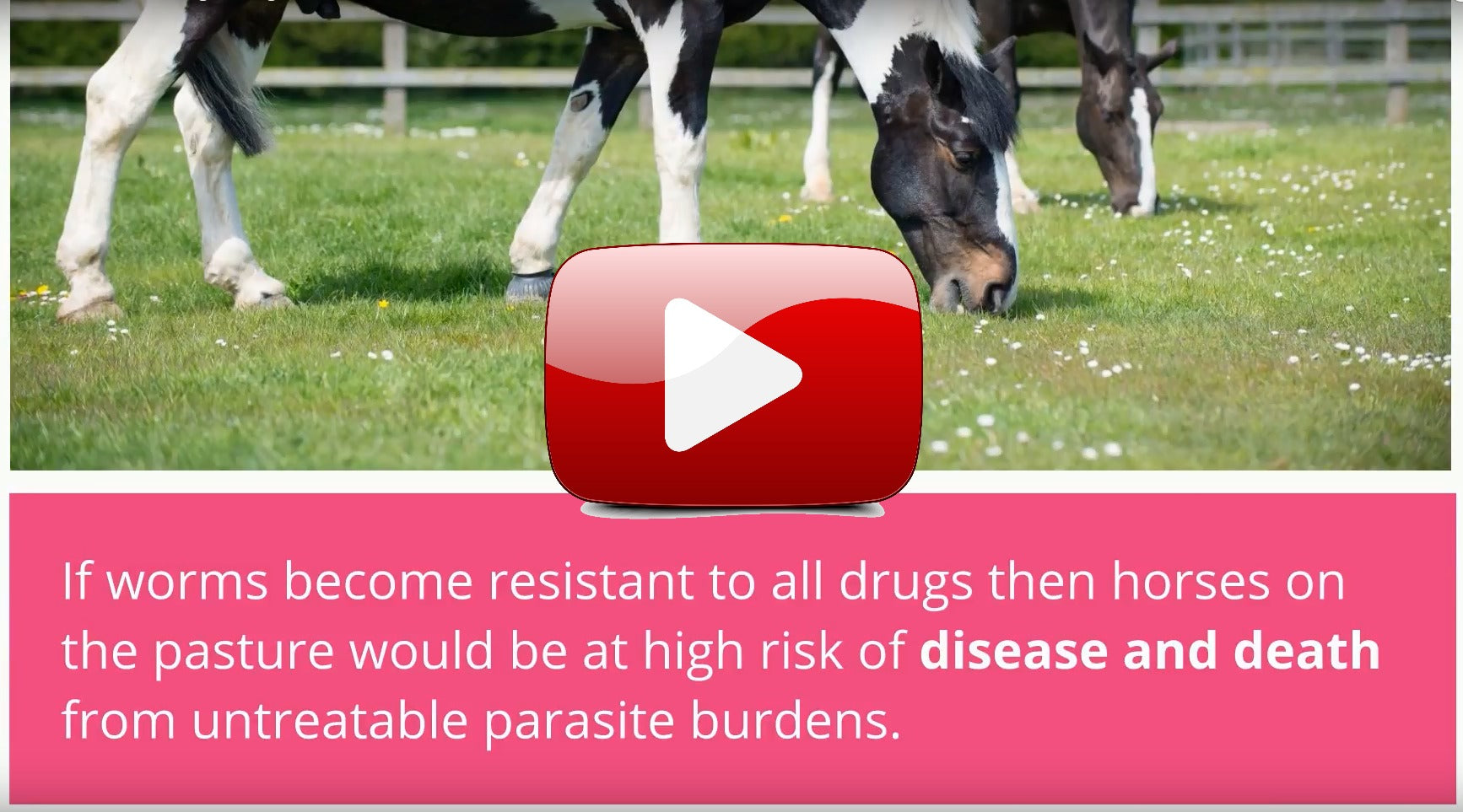 Explainer Video: Worm Resistance in Horses