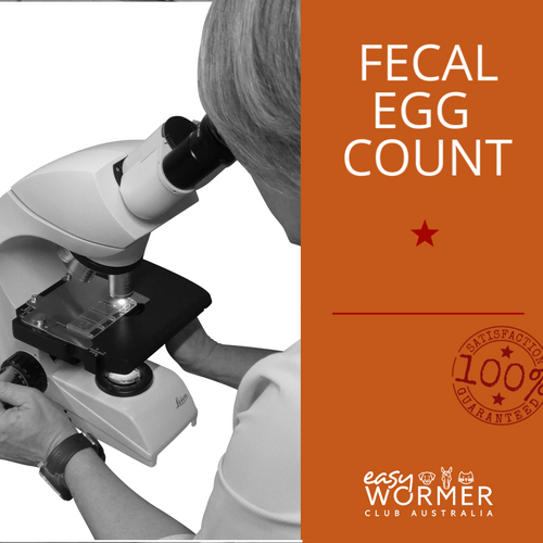 One-Off Feacal Egg Count FEC For Horses