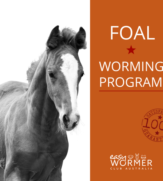 Foal Worming Program | Horse Worming | Equine Worm Control