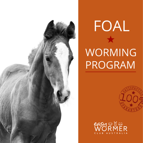 Foal Rotational Horse Worming Program 5 x a Year