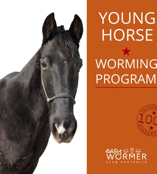 Equine Worming Program for Young Horses