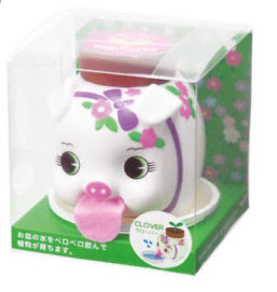 White eggling self watering pig plant clover