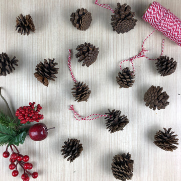 Pinecone Craft