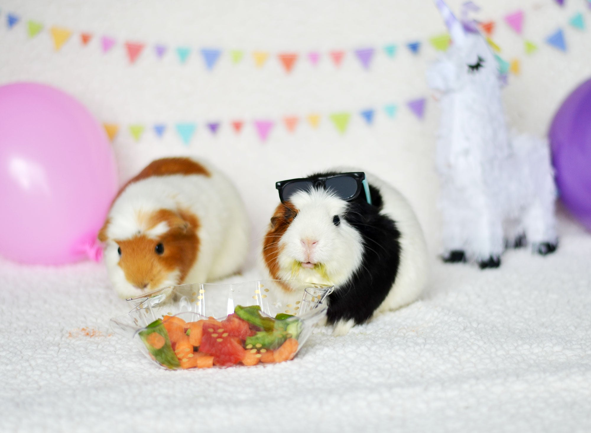 Guinea Pig Birthday Party