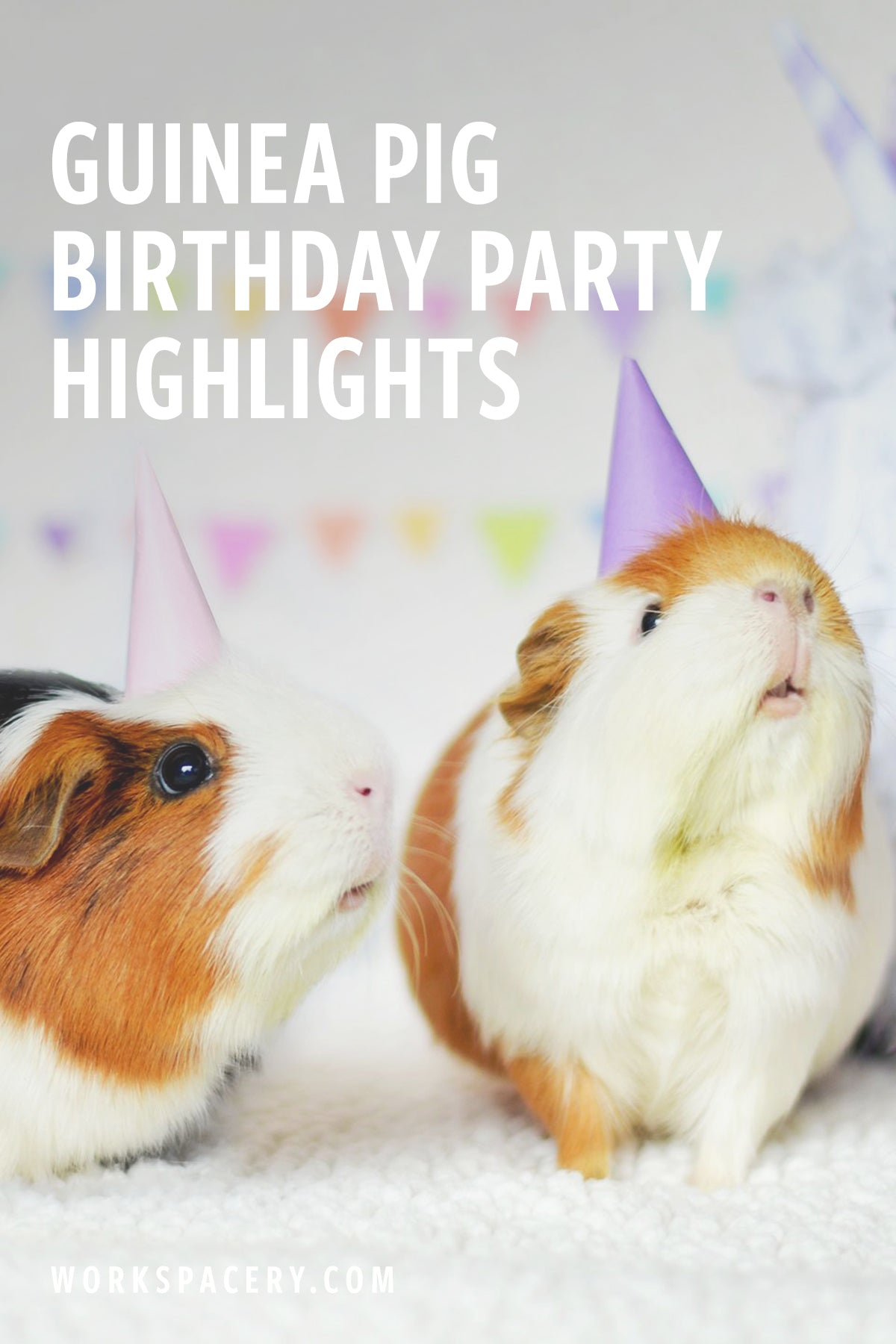 Guinea Pig Birthday Party Highlights